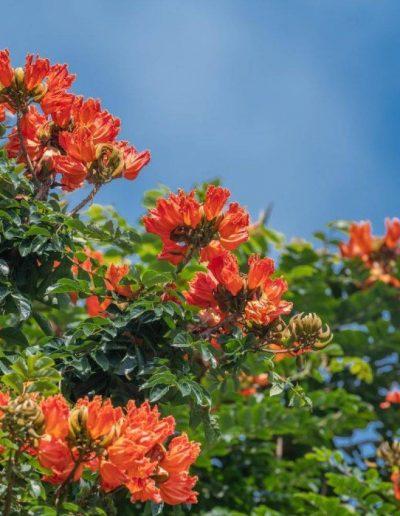 1-5-nagshampa-garden-flowers