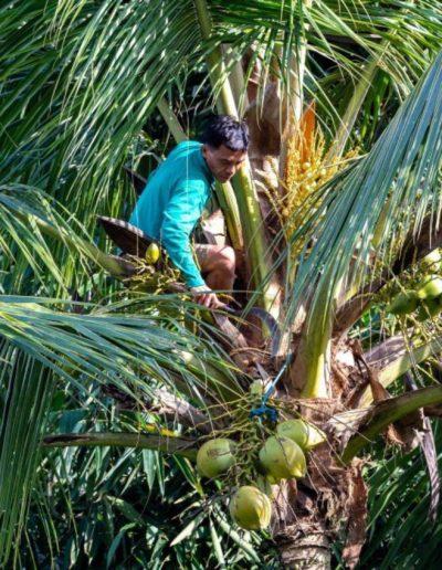nag shampa-gallery-54-fresh-coconut-from-villa